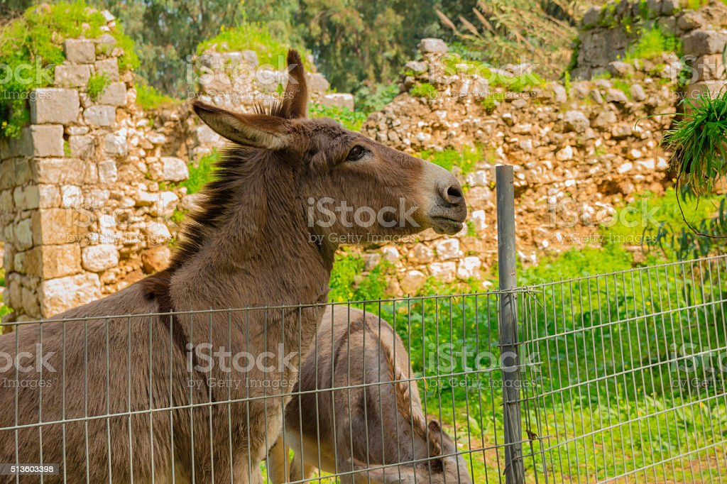 Donkey behind metal fence stock photo