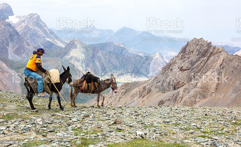 Donkey caravan stock photo