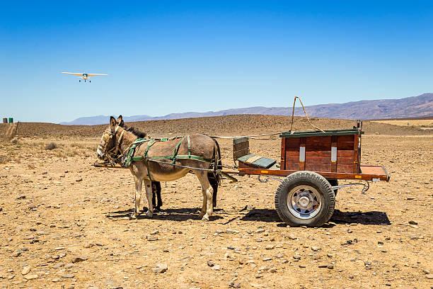 Âne-transport en avion - Photo