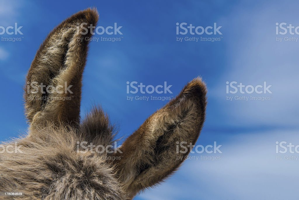 Donkey ears with blue sky royalty-free stock photo