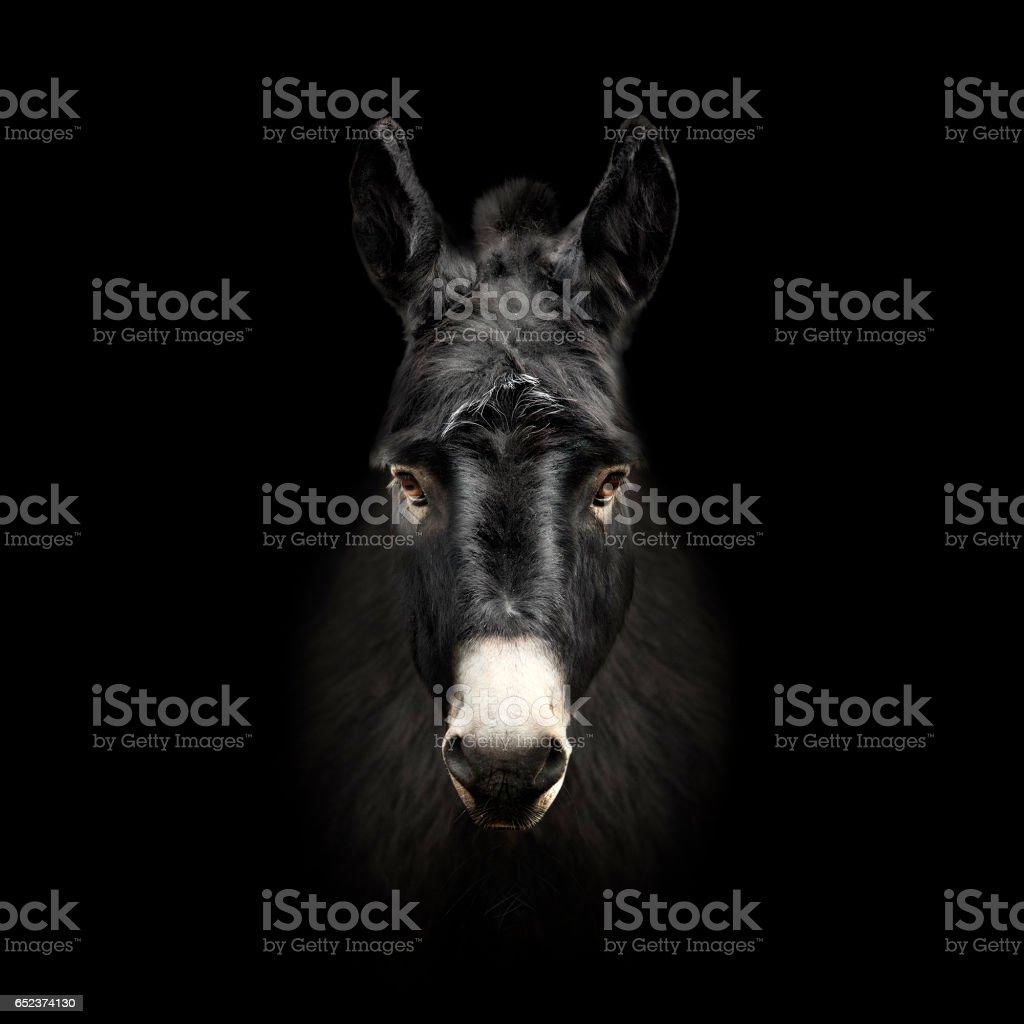 Donkey viso - foto stock