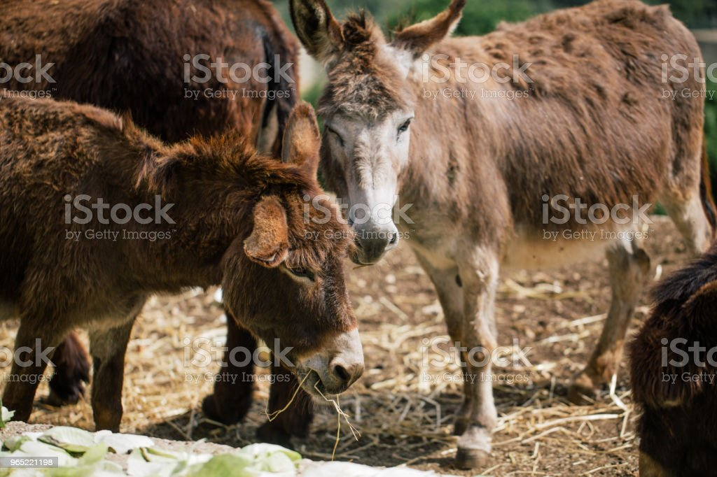 Donkey fasano zoo safari in the Fasano apulia Italy royalty-free stock photo