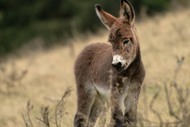 Donkey foal on the pasture Little Donkey standing on his autumn willow foal young animal stock pictures, royalty-free photos & images