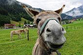 donkey funny portrait
