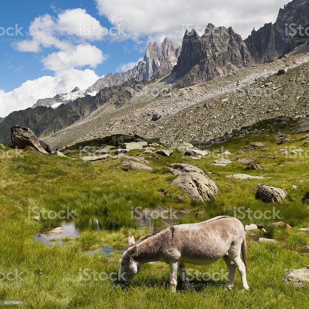 Donkey grazing in the mountains stock photo