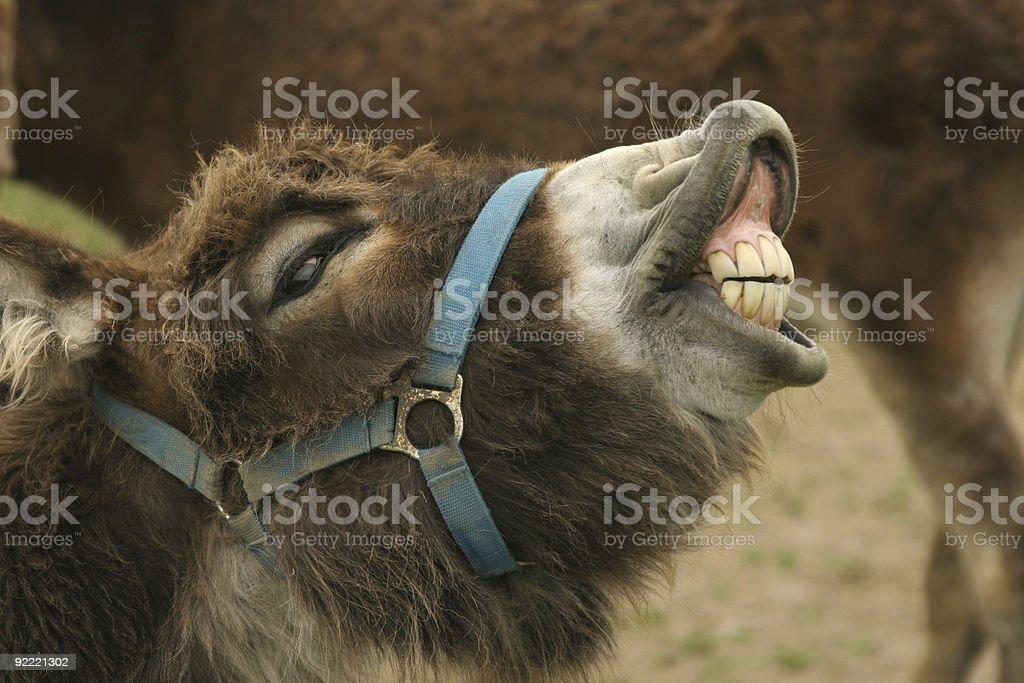 Donkey falso - foto stock