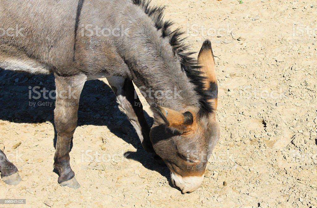 Donkey in a paddock Lizenzfreies stock-foto