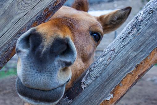 Donkey  in a zoo