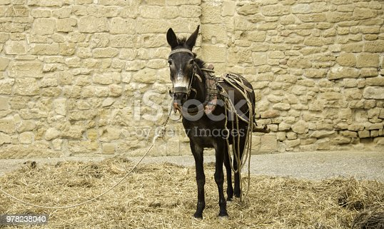 Donkey in field walking, animals and nature