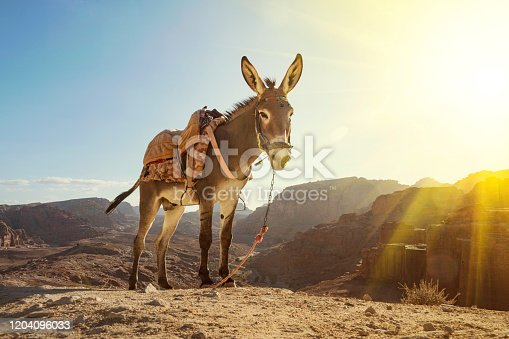 istock Donkey in Petra ancient town. Donkey portrait close up, 1204096033