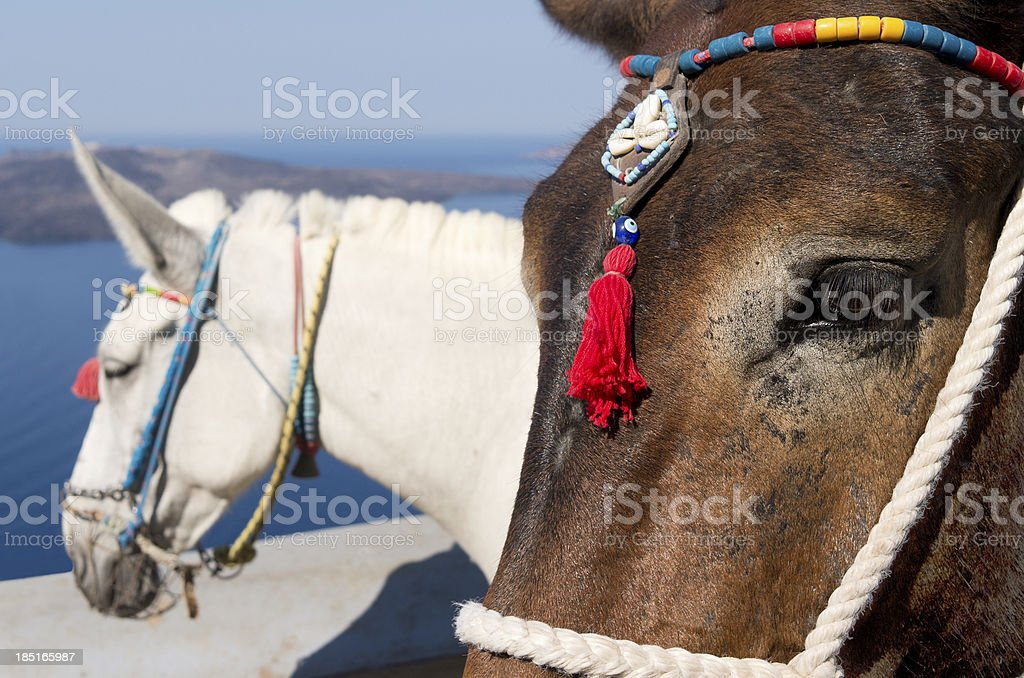 Donkey in Thira. royalty-free stock photo