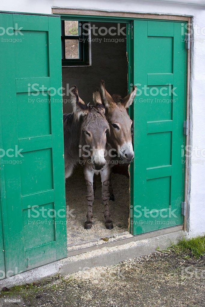 Donkey life stock photo