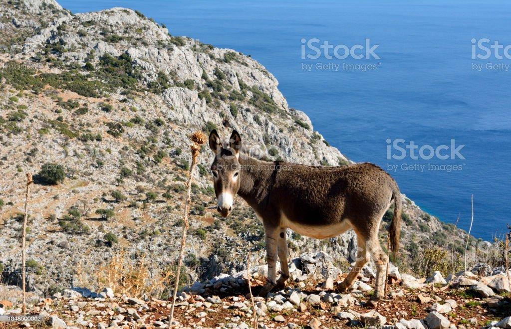 Türkiye'de Akdeniz sahil şeridi üzerinde eşek. stok fotoğrafı
