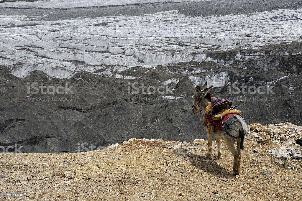 Donkey on the edge of rock royalty-free stock photo