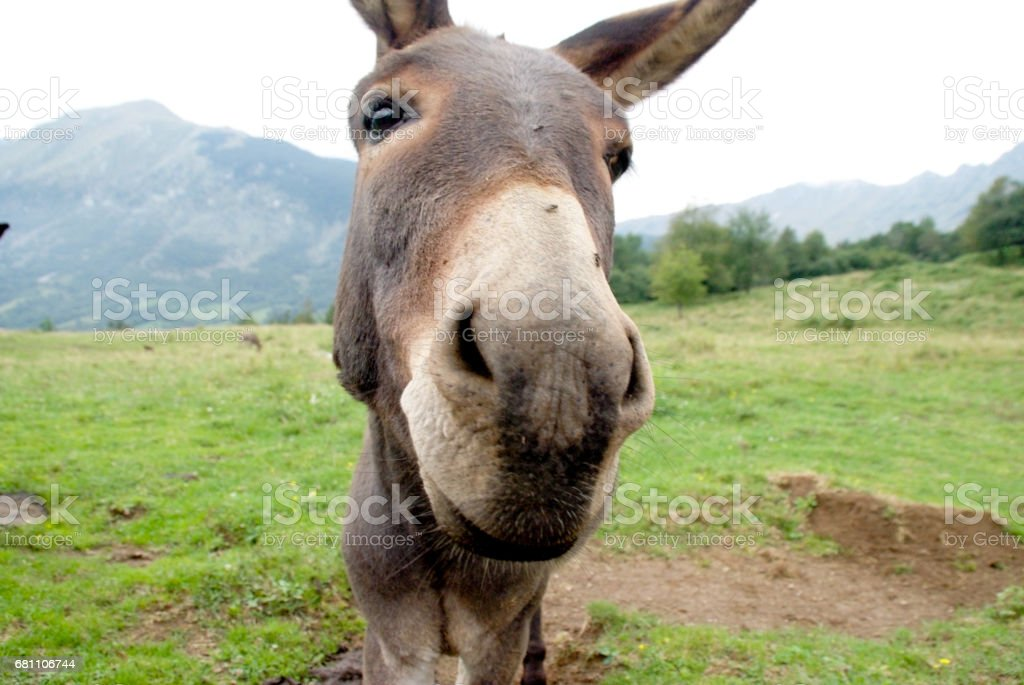 Donkey On The Pasture In The Slovenian Mountain royalty-free stock photo