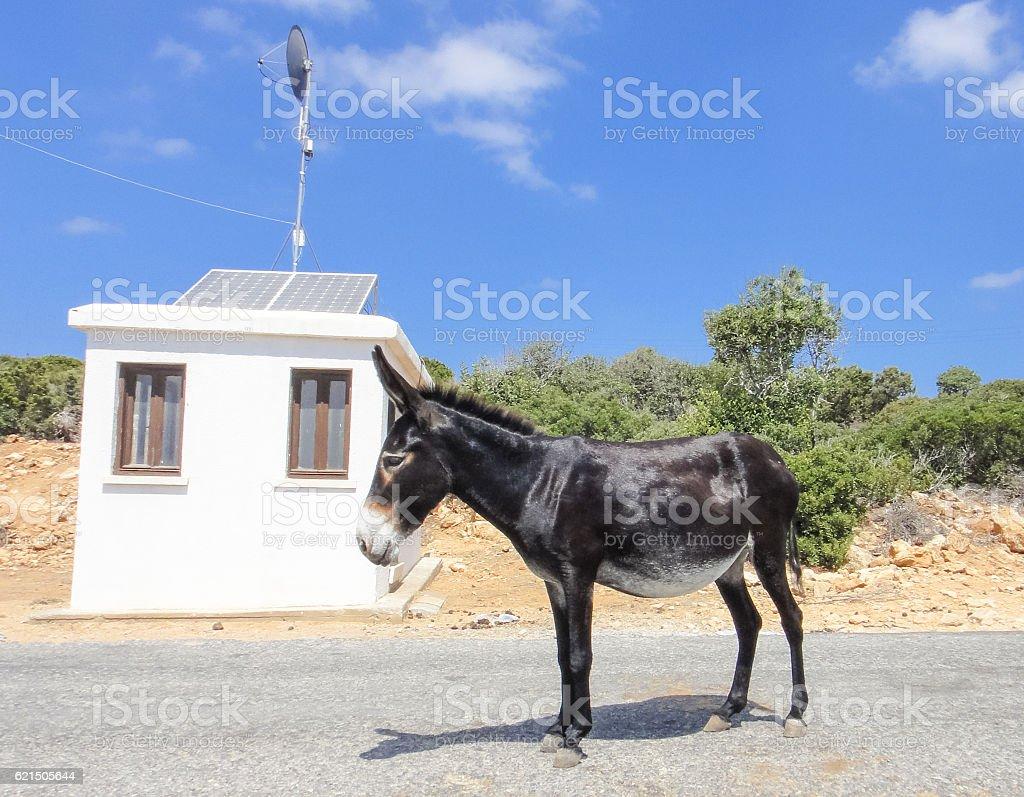 Âne sur la route. Île de Chypre photo libre de droits