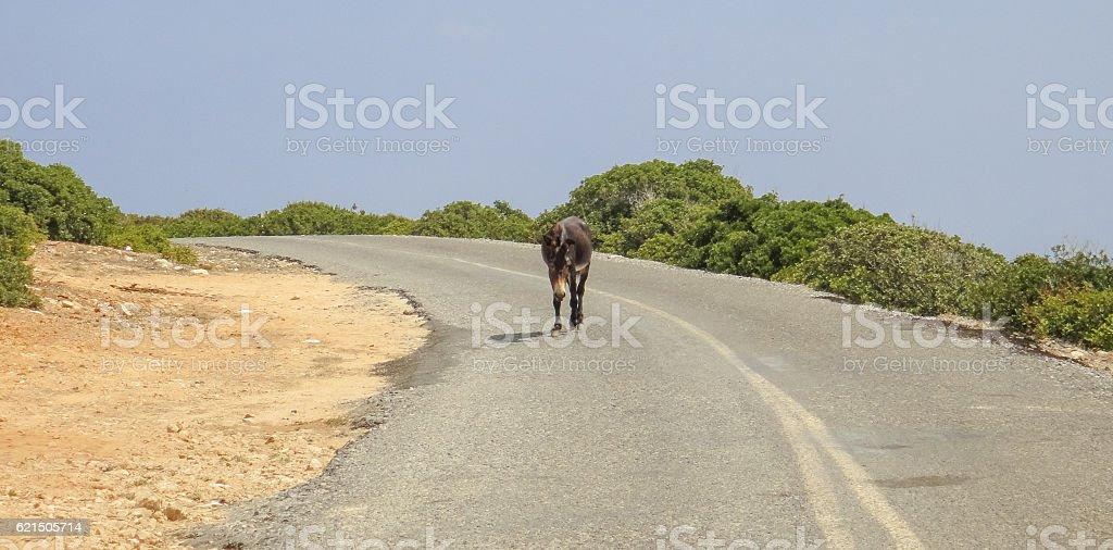 Asino sulla strada. Isola di Cipro foto stock royalty-free