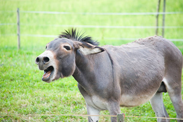 donkey - buttock stock photos and pictures