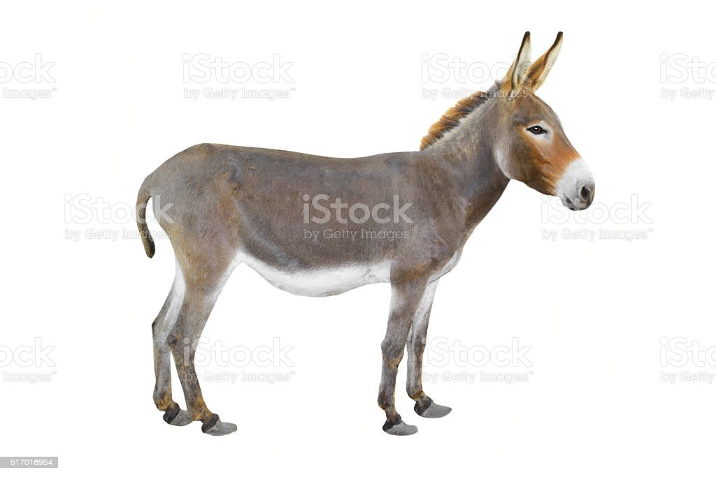 Esel – Foto