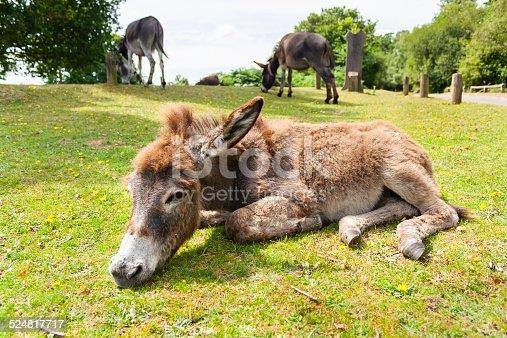 istock Donkey 524817717