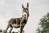 Low angle shot of a cute donkey standing on field against sky