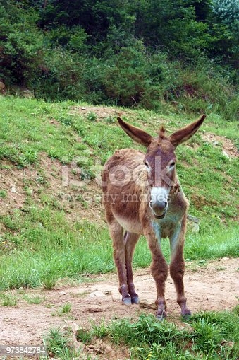 Small brown donkey on nature background