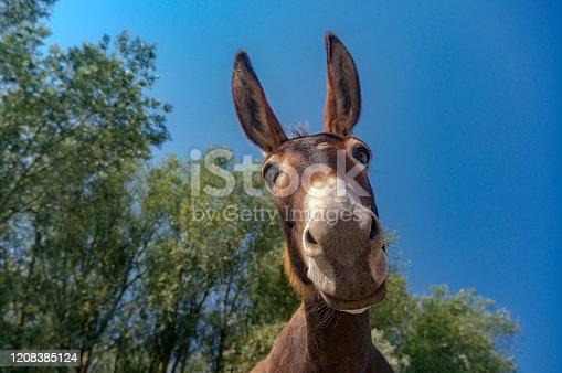 istock Donkey portrait 1208385124