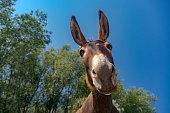 Close up shot of a donkey head