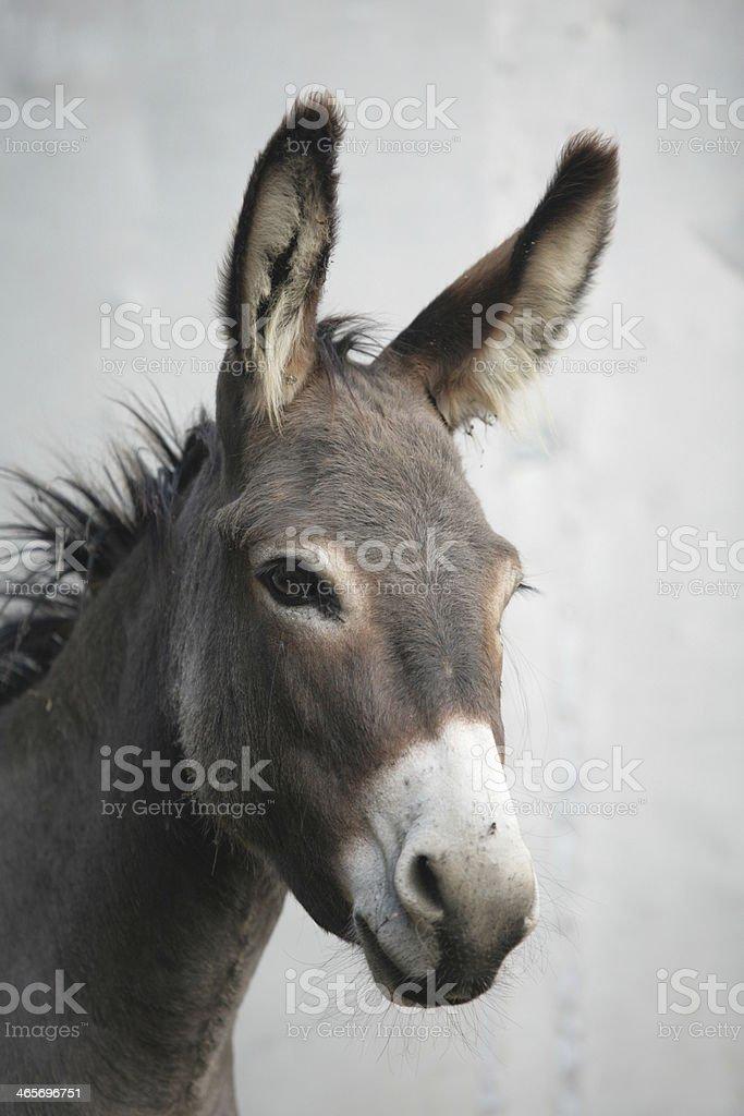 Donkey Ritratto - foto stock