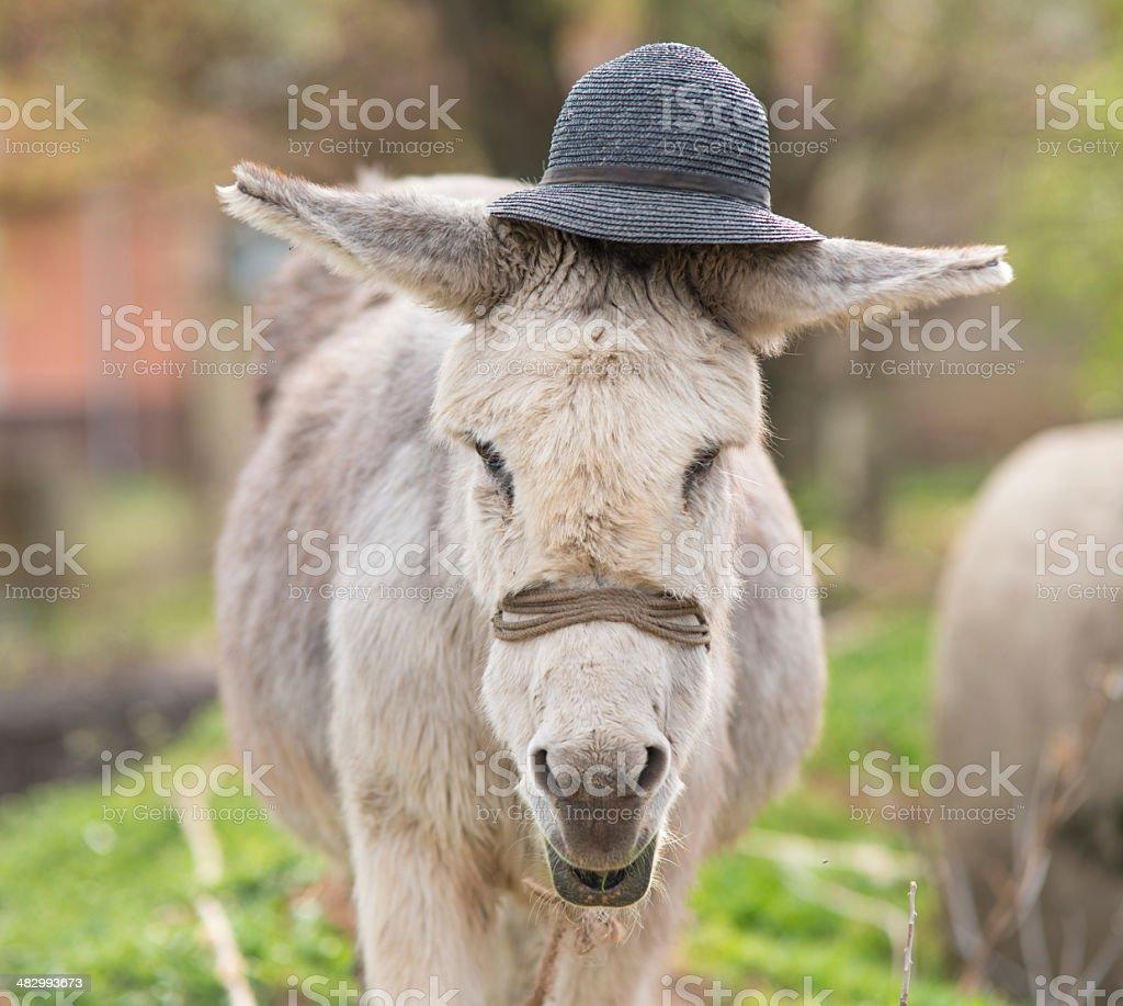 Donkey portrait royalty-free stock photo