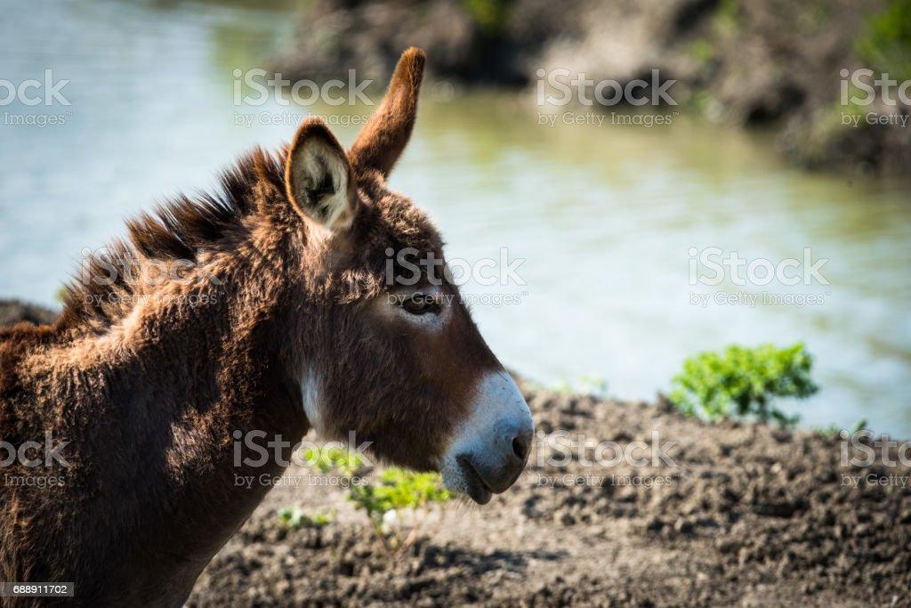 Donkey portrait - foto stock