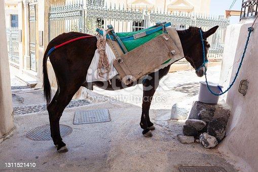 istock Donkey, Pyrgos, Santorini, Greece 1311521410