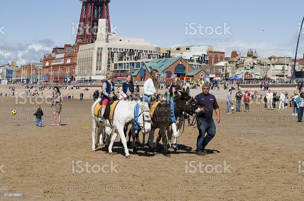 Donkey Rides stock photo