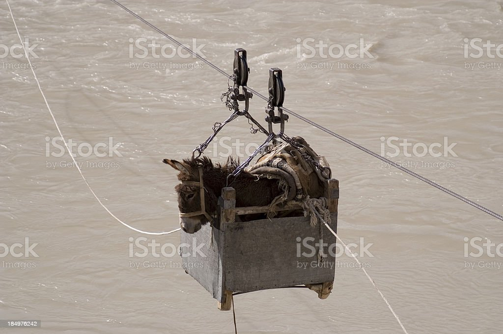 Donkey - river crossing stock photo