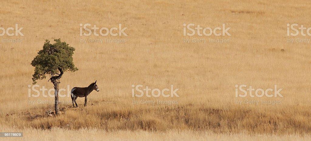 Donkey seeking shelter under tree royalty-free stock photo
