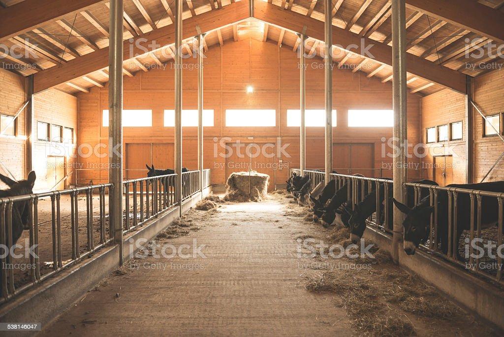 Donkey stable stock photo