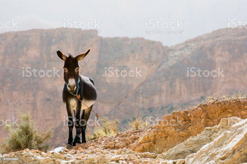 Esel stehen – Foto