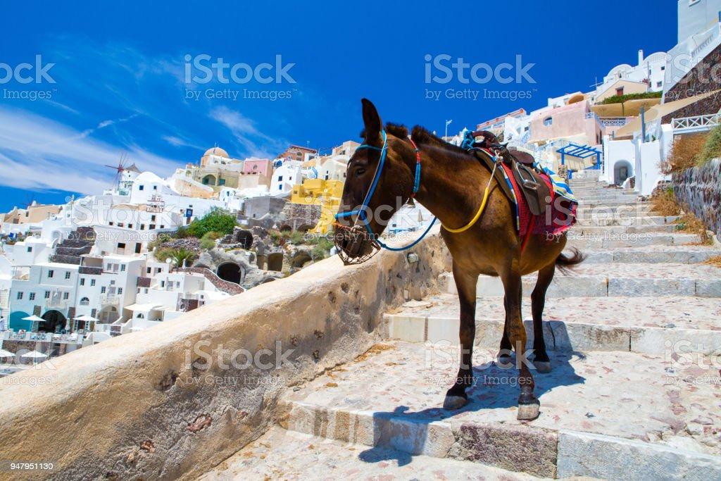 Donkey taxis in Santorini - foto stock