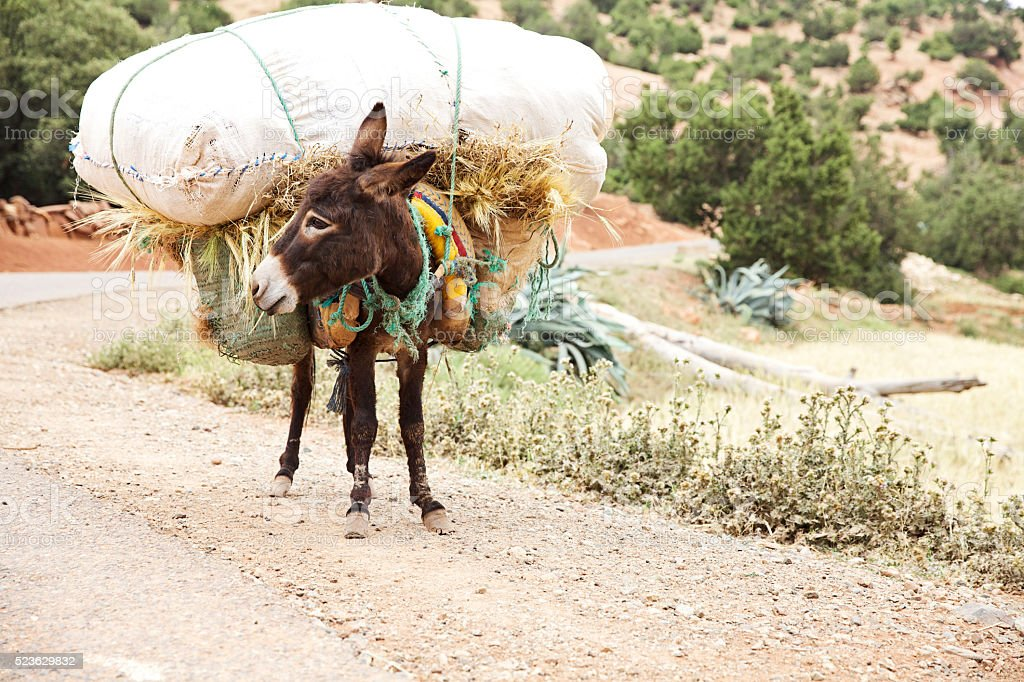 donkey weighed down with heavy load of hay in mountains stock photo