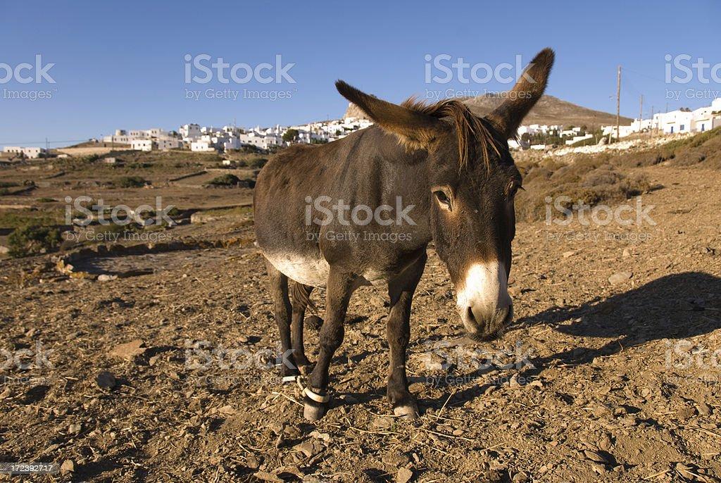 Donkey with Greek Village royalty-free stock photo