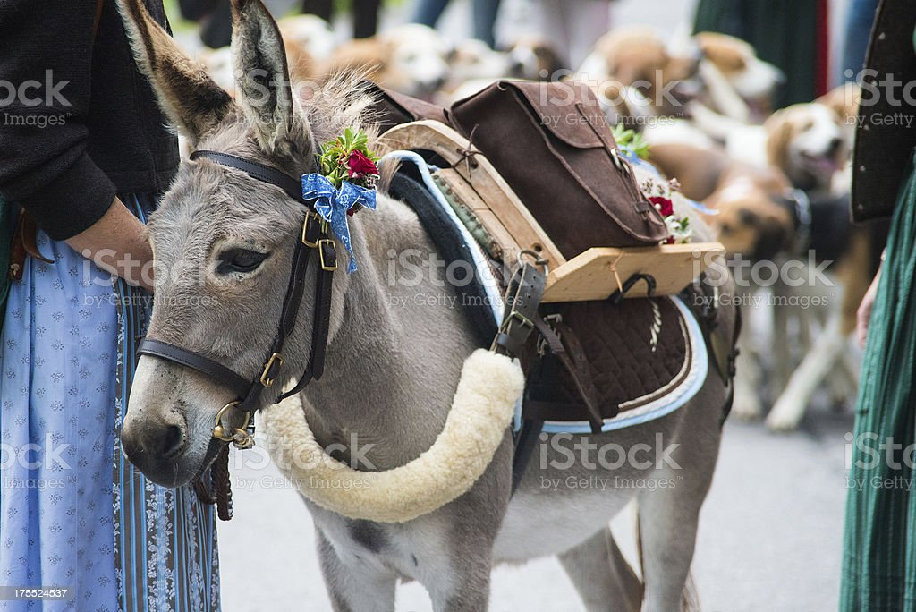 donkey with ornament royalty-free stock photo