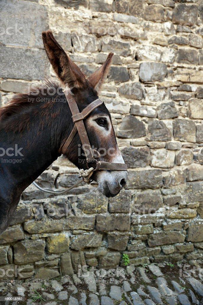 donkey-navarre stock photo