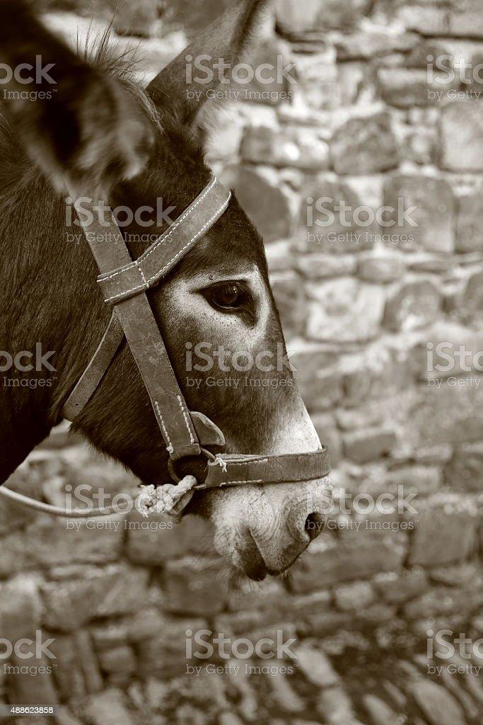 donkey-orhipean stock photo
