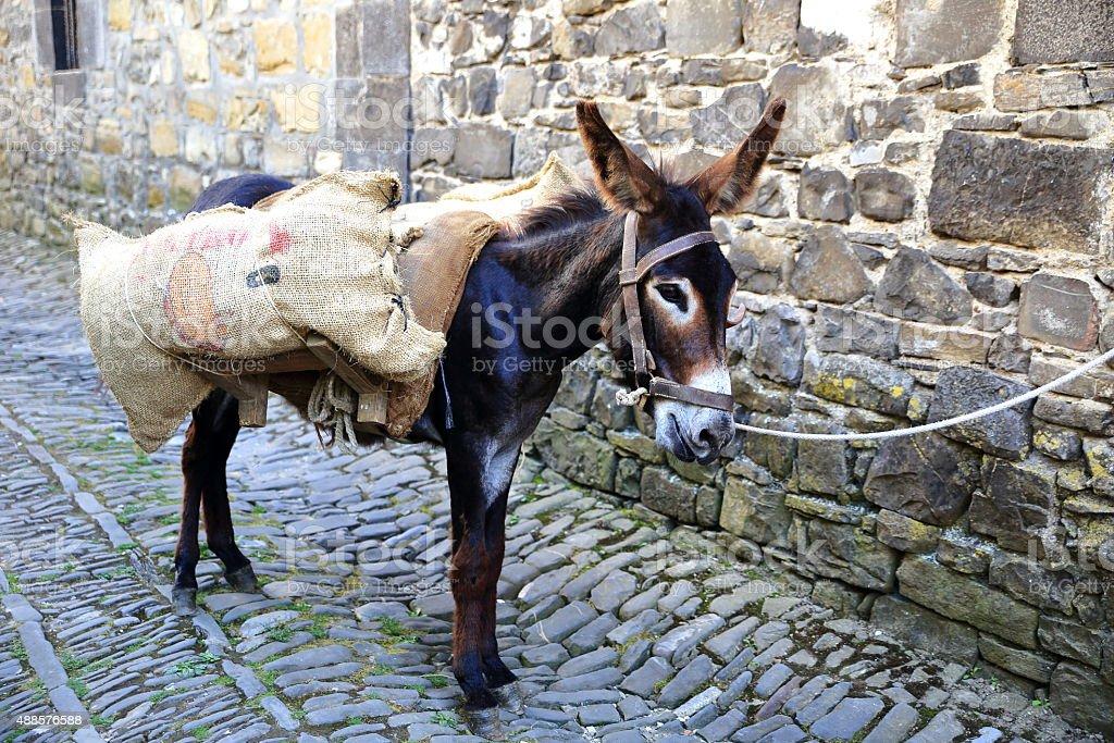 donkey-orhipean-otsagabia stock photo