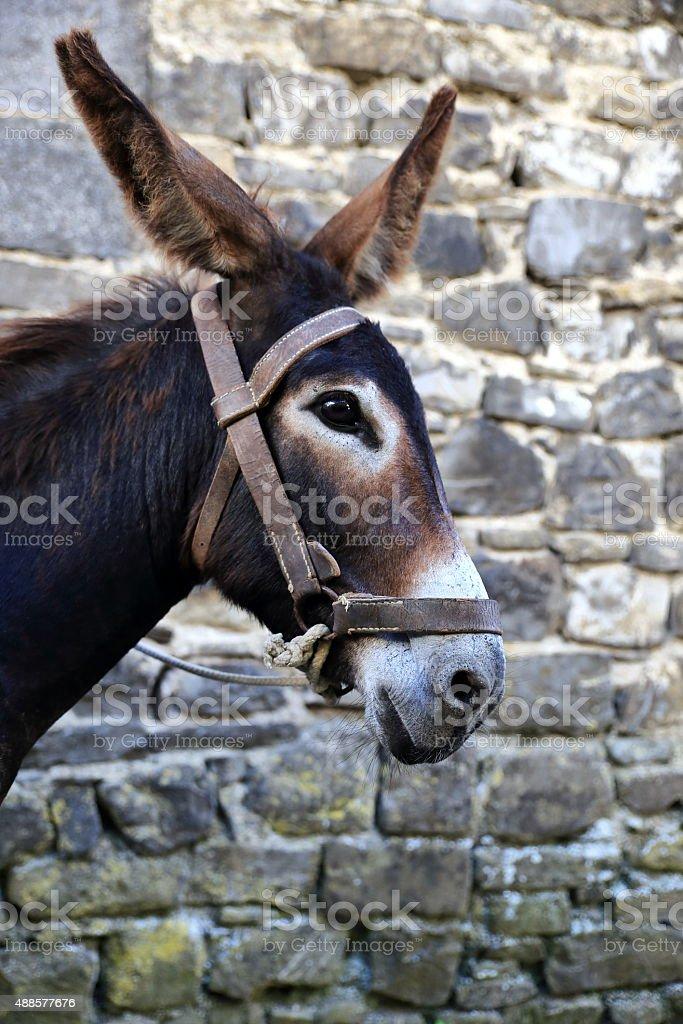 donkey-otsagabia stock photo