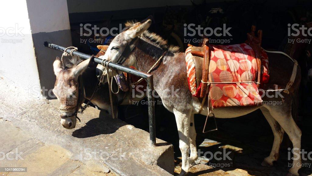 Donkeys at work, Lindos, Rhodes, Greece – zdjęcie