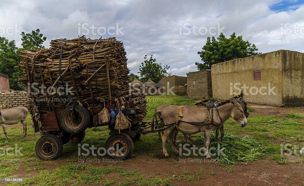 Donkeys carrying a heavy wood load stock photo