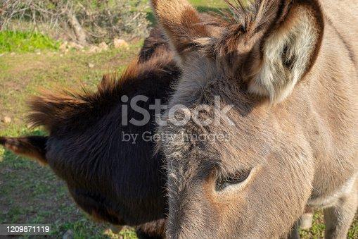 istock Donkey's eye 1209871119