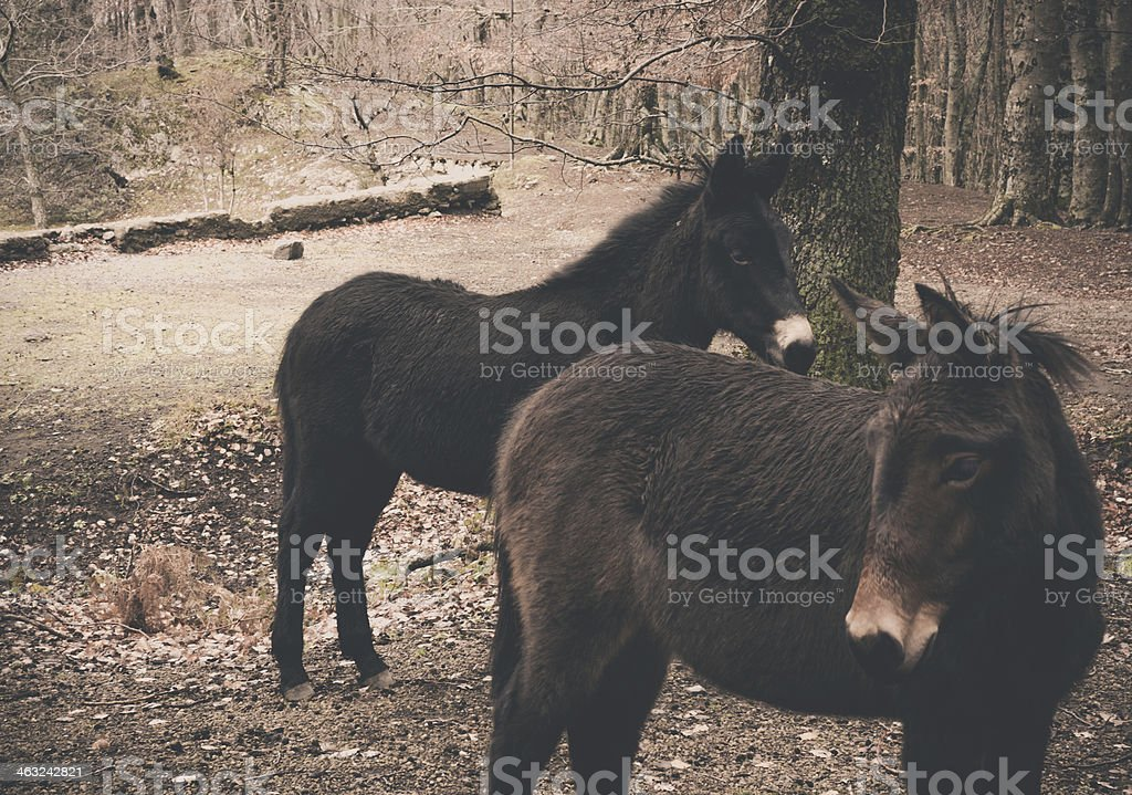 Donkeys in Country during Winter royalty-free stock photo