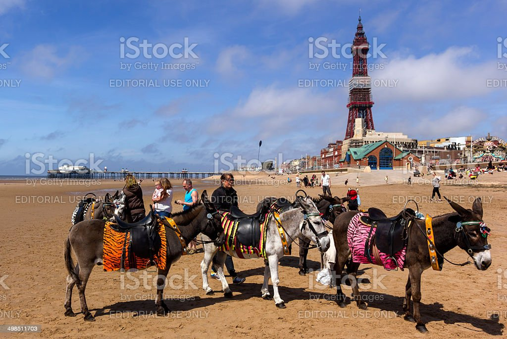 Donkeys in Front of Blackpool Tower stock photo